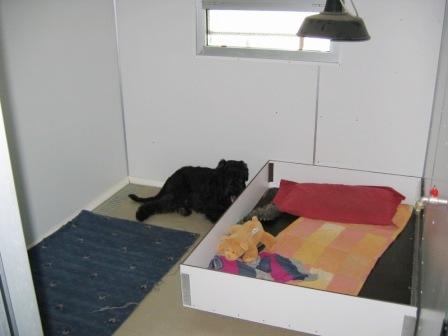 Sala Parto Per Cani : Il parto nello shiba inu