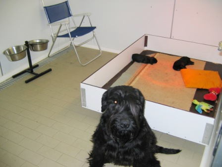 Sala Parto Per Cani : Cassa parto per cani con bordo salva cuccioli posot class