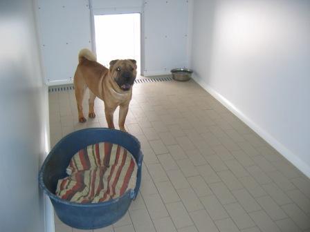 Pensione per cani vacanze del cane del gatto for Arredamento per cani